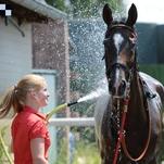 Ženy a dívky okolo koní poprvé