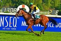 Kůň roku Galopp News: Nejlepší starší kůň