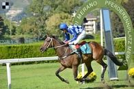 Kůň roku Galopp News: Nejlepší proutěnkář