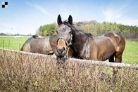 Téma týdne: Kolik stojí ustájení a trénink koně?