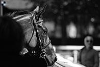 Longchamp: Nagano Gold pátý v Gr.2